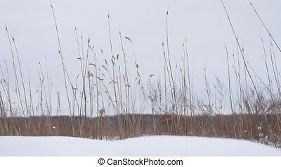 dry grass sways in the wind snow winter field beautiful landscape nature