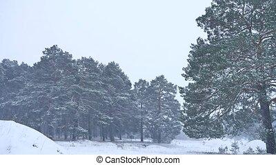Beautiful christmas blizzard tree in winter landscape in...
