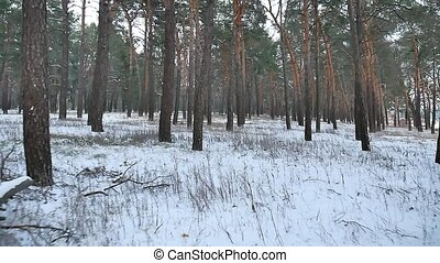 pine forest winter christmas tree motion snow field in...