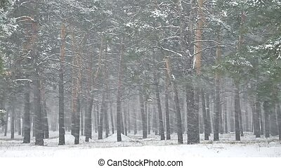 snowstorm nature blizzard the woods snowing winter,...