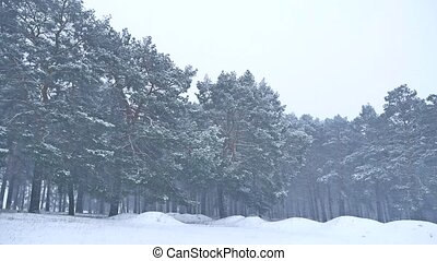 Beautiful christmas blizzard tree in winter nature landscape...