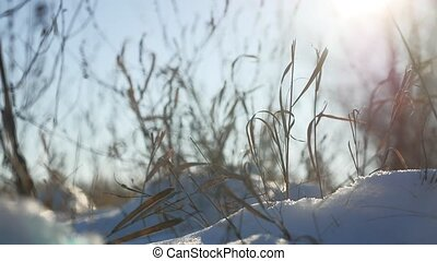 dry grass sways in the wind winter snow nature landscape -...