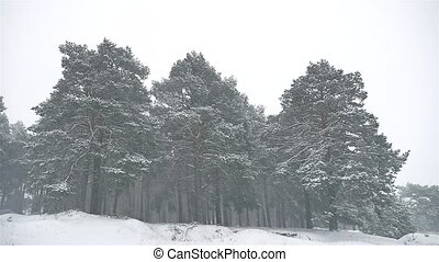 snowstorm the woods nature snowing blizzard winter,...