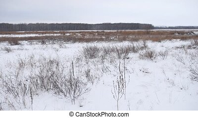 Winter field of dry grass in the snow nature landscape...