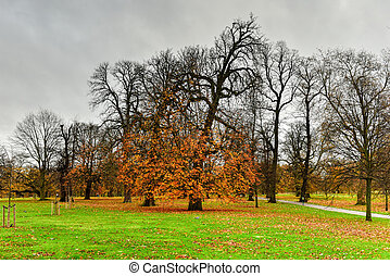 Hyde Park - London - Hyde Park in London during the autumn...
