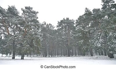 snowstorm blizzard in the woods snowing winter, christmas...
