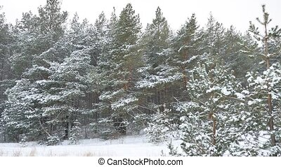 Winter pine christmas tree forest wildlife winter landscape,...