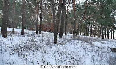 pine forest winter christmas tree snow field motion in...