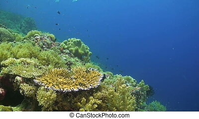 Colorful coral reef with many fish