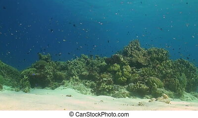 Sandy area with a colorful coral reef