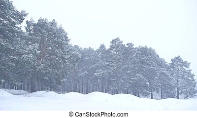 Beautiful christmas blizzard tree in nature winter landscape...