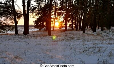winter forest and sun landscape. christmas sunlight tree...