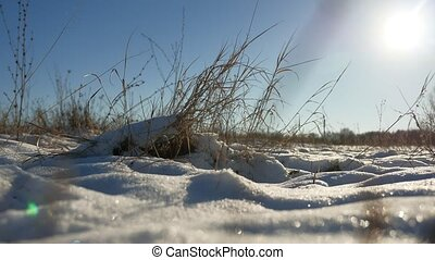 dry grass sways in the wind winter snow landscape nature...