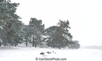 Beautiful blizzard christmas tree in winter landscape late...