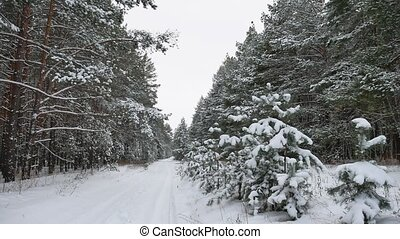 Winter pine path christmas tree forest wildlife winter...