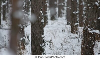 tree trunks christmas tree winter forest pine nature...