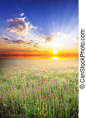 Natural meadow in spring - spring meadow with flowers and...