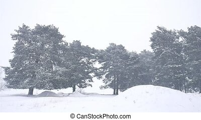 nature snowstorm the woods snowing blizzard winter,...