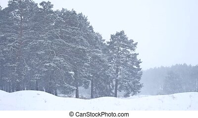 Beautiful christmas blizzard tree nature in winter landscape...