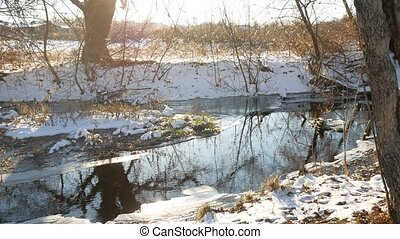 Forest creek flowing grass in the forest nature late winter beautiful landscape dry tree branches