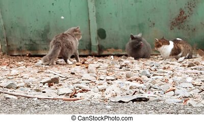 Feral cats resting near trash container focus on foreground,...