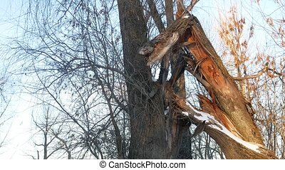 broken tree in the forest tree trunk forest winter landscape...
