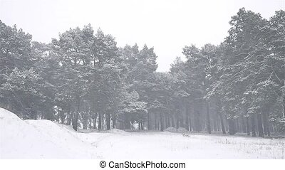 snowstorm nature the woods blizzard snowing winter,...