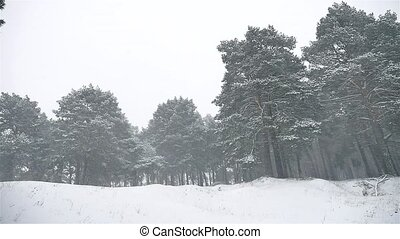snowstorm the woods snowing blizzard winter nature,...