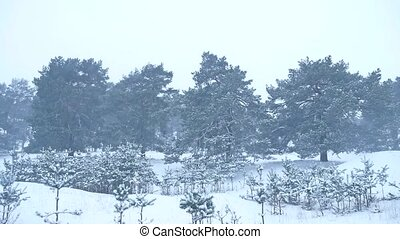 Beautiful christmas tree blizzard in winter landscape in...