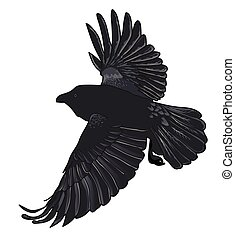 crow.eps - Large black crow in flight on a white background....