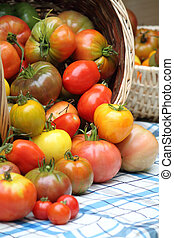 Tumbling basket of freshly picked heritage tomatoes