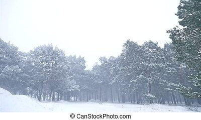 snowstorm the woods blizzard nature snowing winter,...
