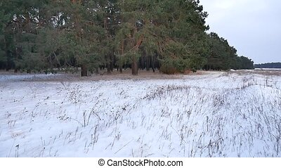 pine forest winter motion christmas tree snow field in...