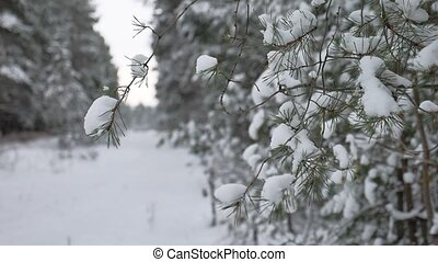 tree branch in the snow in the wind christmas swinging...