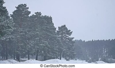 Beautiful christmas blizzard nature tree in winter landscape...