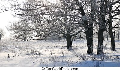 trees in snow winter field snowing nature landscape sunlight...