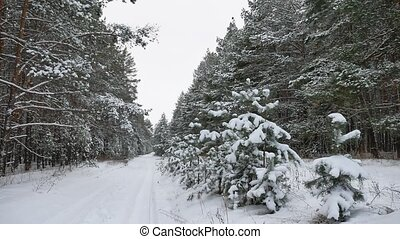 Winter path pine christmas tree forest wildlife winter...