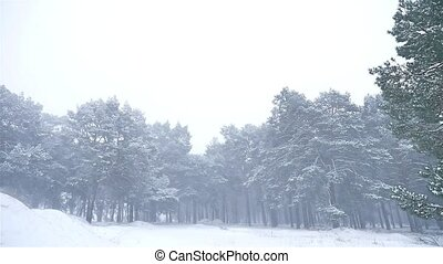 snowstorm the woods blizzard snowing nature winter,...