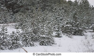 Young trees in snow nature landscape beautiful christmas...