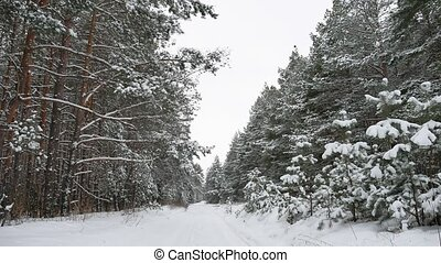 Winter pine path christmas tree nature forest wildlife...