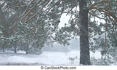 Beautiful nature christmas tree blizzard in winter landscape...