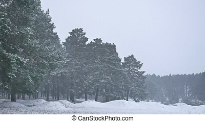 Beautiful christmas nature blizzard tree in winter landscape...