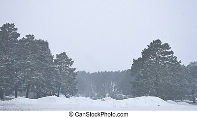 Beautiful nature christmas blizzard tree in winter landscape...