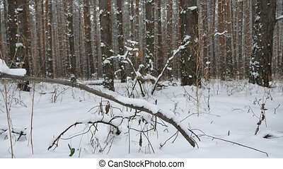 tree trunks christmas tree winter forest nature pine...