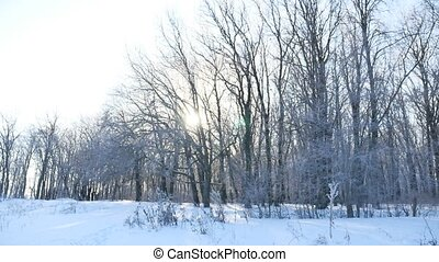 trees snow winter field snowing nature landscape sunlight -...
