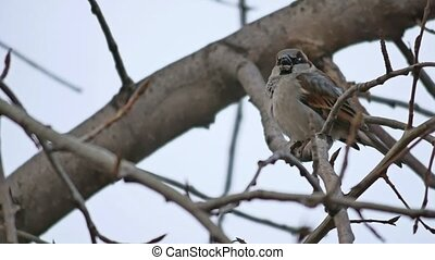 sparrow sitting on a branch and eating bird seed winter...
