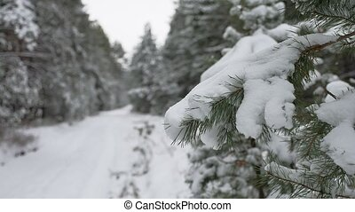 tree branch in the snow in the wind christmas swinging nature winter forest landscape