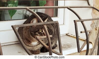 Homeless cat is sitting on windowsill with guarding grid,...