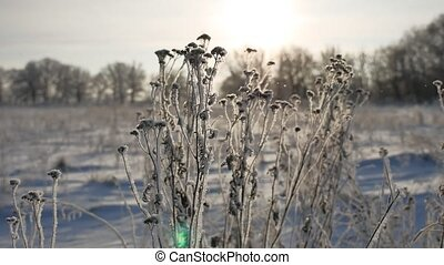 frozen grass sways in the wind sunlight in the winter snow...