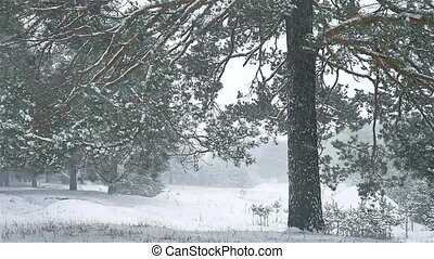 snowstorm the woods nature blizzard snowing winter,...